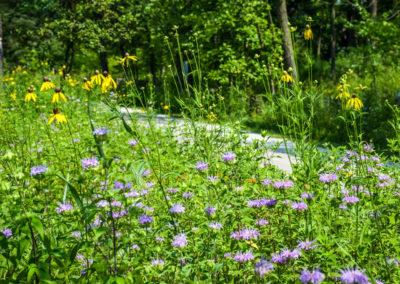 Flowers along trail photo