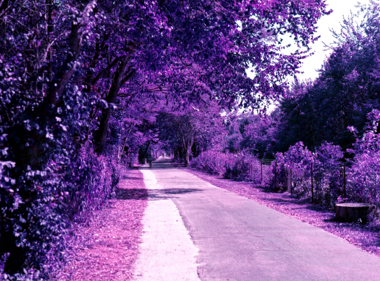 Green Bay Trail on Lomochrome Purple Film